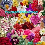 "Free scrapbook elements ""Assorted Flowers 2″ from Lugar Encantado da Neli – FS"