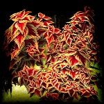 Free scrapbook Bushes with red leaves from Mgtcs Digital Art Stuff